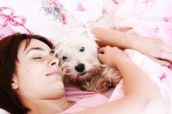 Нужно ли отказаться от сна с питомцем?