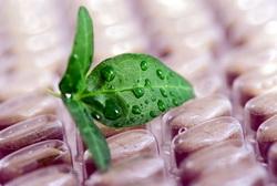 Курс биодобавок